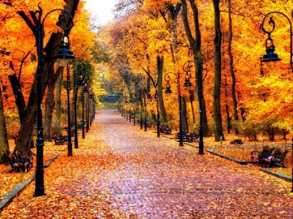 وصف شجرة في فصل الخريف بأسلوب أدبي